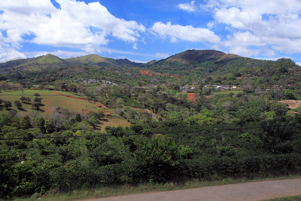 The Central Valley, a patchwork of coffee, sugarcane, mixed gardens, and patches of trees, including Erythrina trees in blossom (orange flowers).