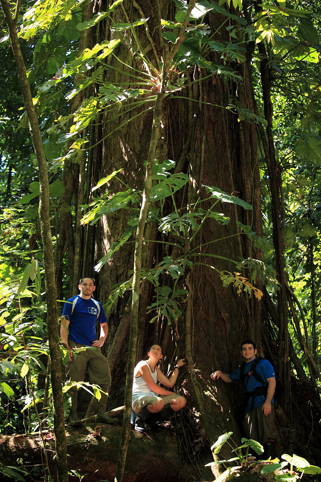 Steve, Laura, and Chris exploring a large tree in Corcovado National Park.