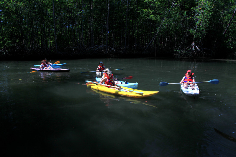 Kayaking in the mangrove estuary of the Sierpe River