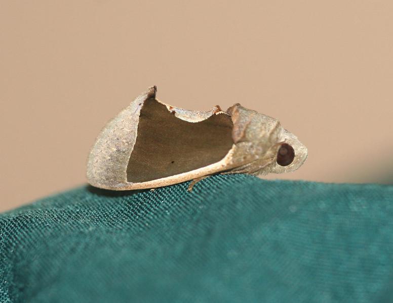 Unknown moth