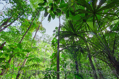Tropical rainforest in Costa Rica - Punta Leona, Puntarenas province, Costa Rica
