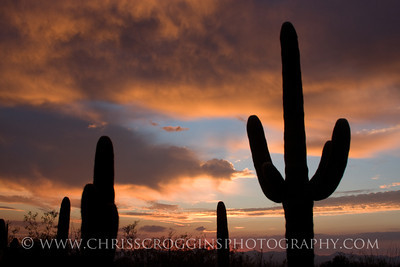 Sunset Saguaro National Park