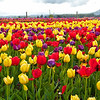 Tip-Toeing-in-the Tulips 7