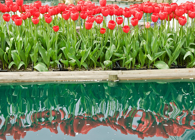 Copy of 2009 April 18_Skagit Wa_Tulip Festival_14