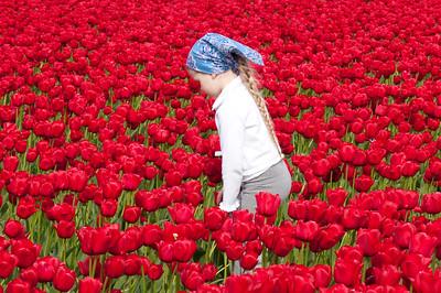 Skagit Tulip Festival-2369