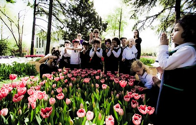 Tulips and class visit in Emirgan, Istanbul