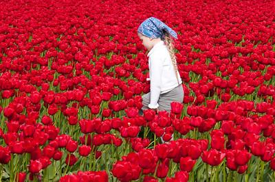 Skagit Tulip Festival-2370