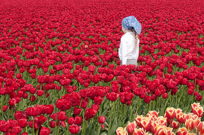 Tulip Festival Skagit, Washington