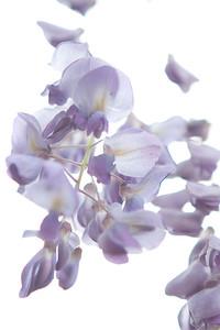 Tuscaloosa Flowers 2009-6482