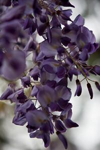 Tuscaloosa Flowers 2009-6483