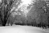 Fort Snelling State Park - The fresh wet snow makes everything a winter wonderland (even though it is supposed to be Spring now).  It was wonderful just driving and walking around in God's beauty.