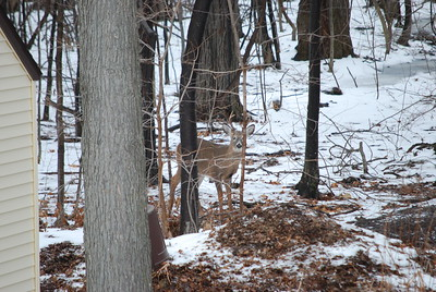 Buck #1 poising for the camera.