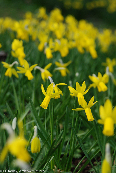 Yellow crowd