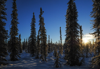 One of the more open views in the forest.  The short, thin trees are a sure sign of permafrost in the soil.