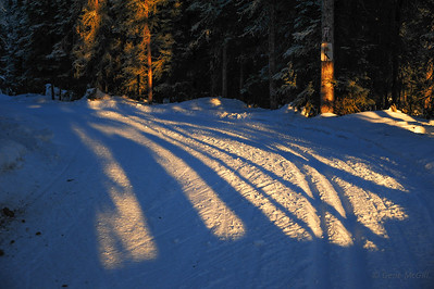 A gap in the trees allows the sun in to illuminate the textures of the trails.
