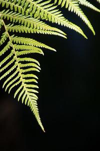 032_BotanicGarden_20201223