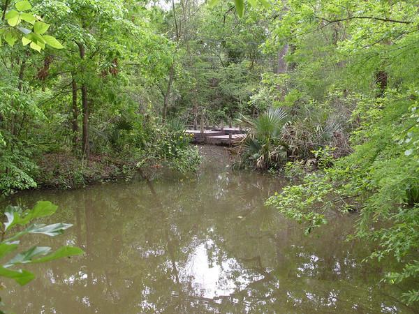 Edith L Moore Nature Sanctuary:  The big pond.