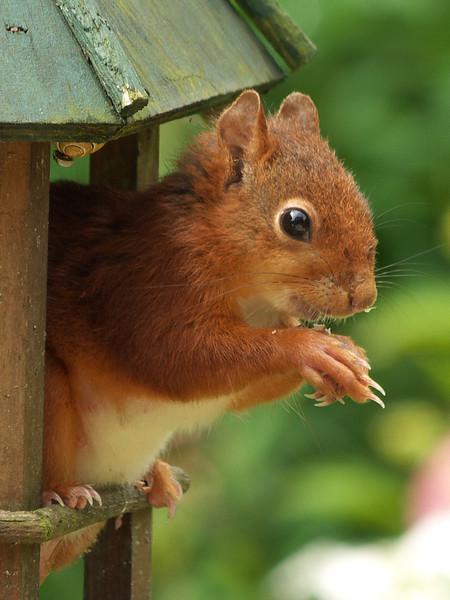Un visiteur gourmand et... poseur ! - Juillet 2012