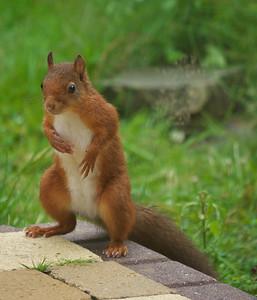 Dans notre jardin, un visiteur gourmand et... poseur [Lumix G1 + Panasonic 100-300 mm]