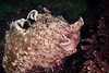 Face to Face with the Monterey Sea Hare