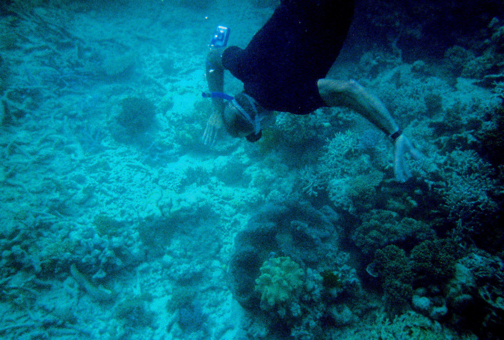 me, trying to get down to a giant clam