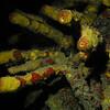 Tube Sponge Bonaire town pier