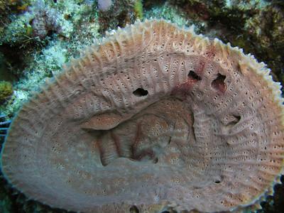 Barrel Sponge with Brittle Stars