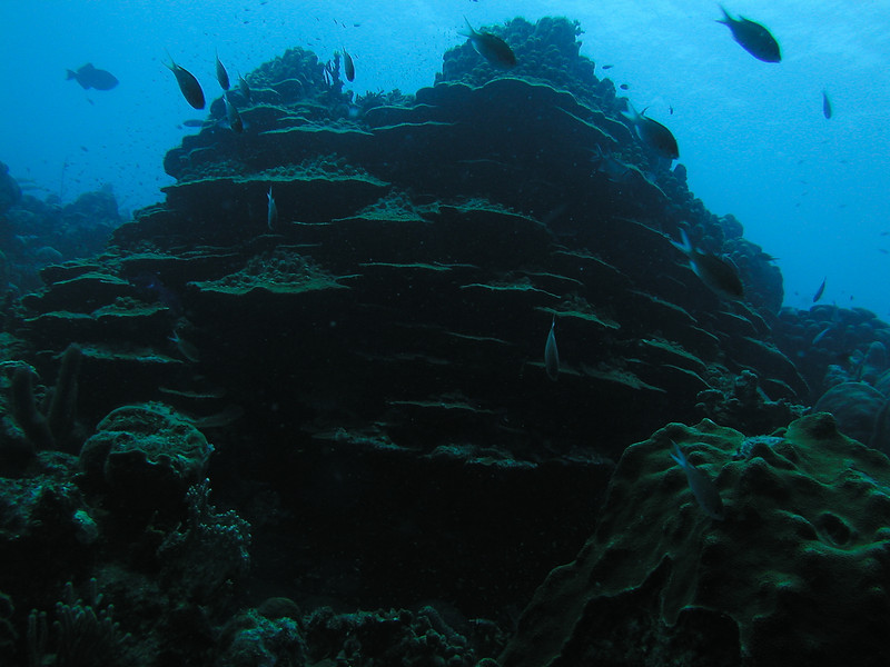 Lettuce Coral Tower