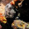 Frog Fish Bonaire Town Pier