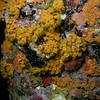 Orange Cup coral Bonaire Town Pier