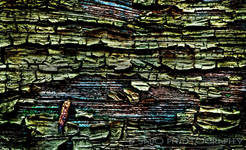 """Man Made Bark""  Parallels are sometimes made between the natural world and man's. As an abstract nature and scenic photographer, I wanted to delve into the color, texture, and patterns of the urban world. Here is chipped paint from an abandoned warehouse, the ""Candoro Marble Works""- National Registry – Knoxville, Tennessee."