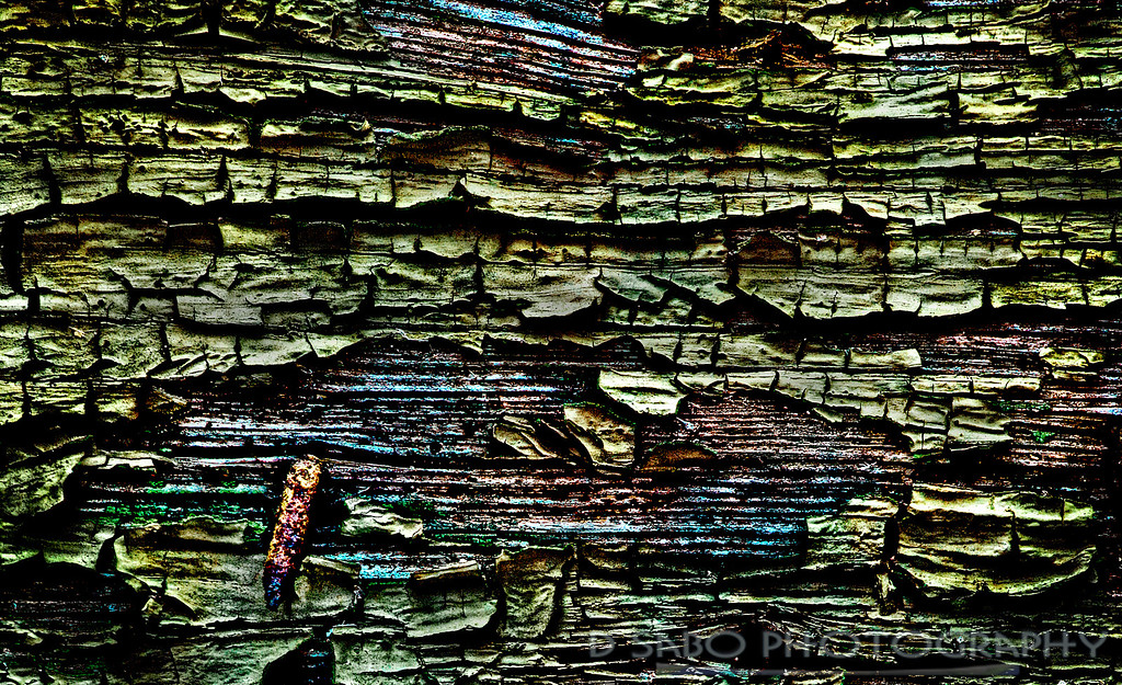 """""""Man Made Bark""""  Parallels are sometimes made between the natural world and man's. As an abstract nature and scenic photographer, I wanted to delve into the color, texture, and patterns of the urban world. Here is chipped paint from an abandoned warehouse, the """"Candoro Marble Works""""- National Registry – Knoxville, Tennessee."""