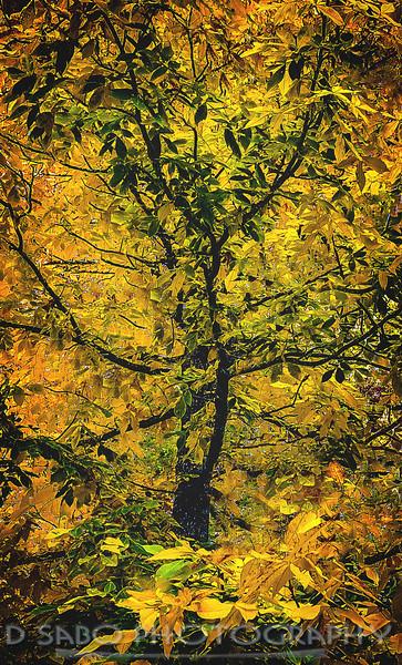Leafing Impressions