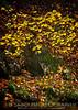 Golden Flecks of Autumn