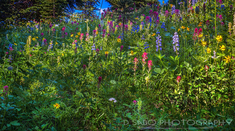 Rainier Flower Party
