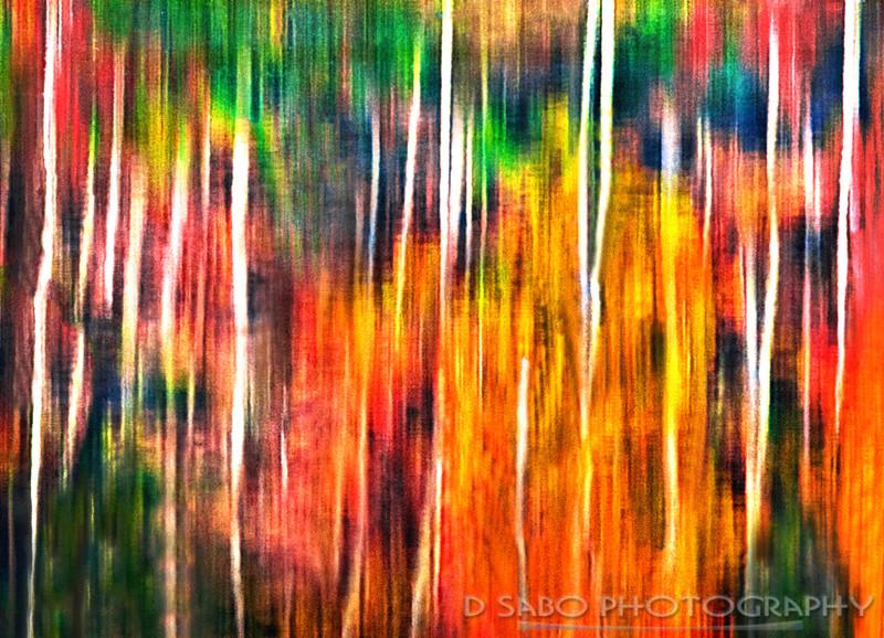 Appalachian Reflection