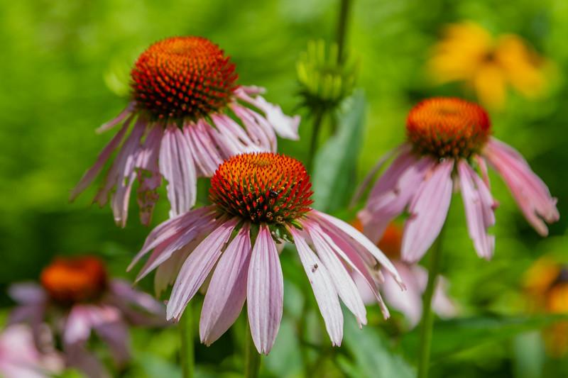 United States Wildflowers