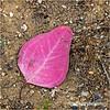 Fallen leaf...