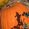 Pumpkin Festival & Pumpkin Patch...