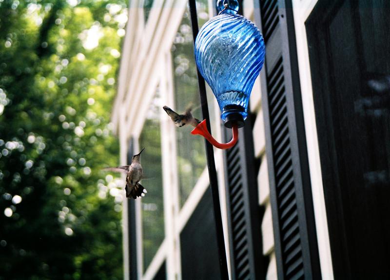 hummingbirds (12)