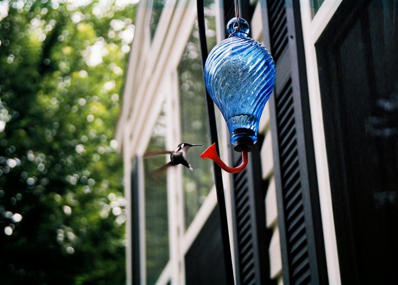 hummingbirds (14)