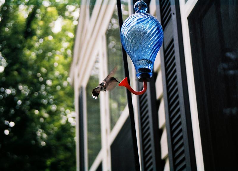 hummingbirds (13)