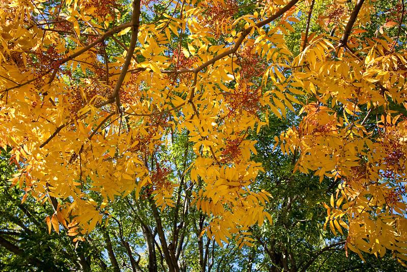 Autumn color contrasts