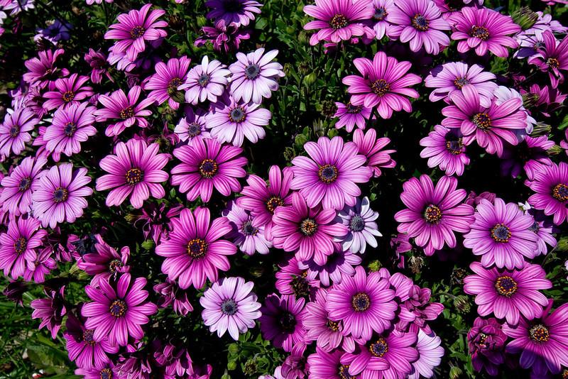 0864 Flowers