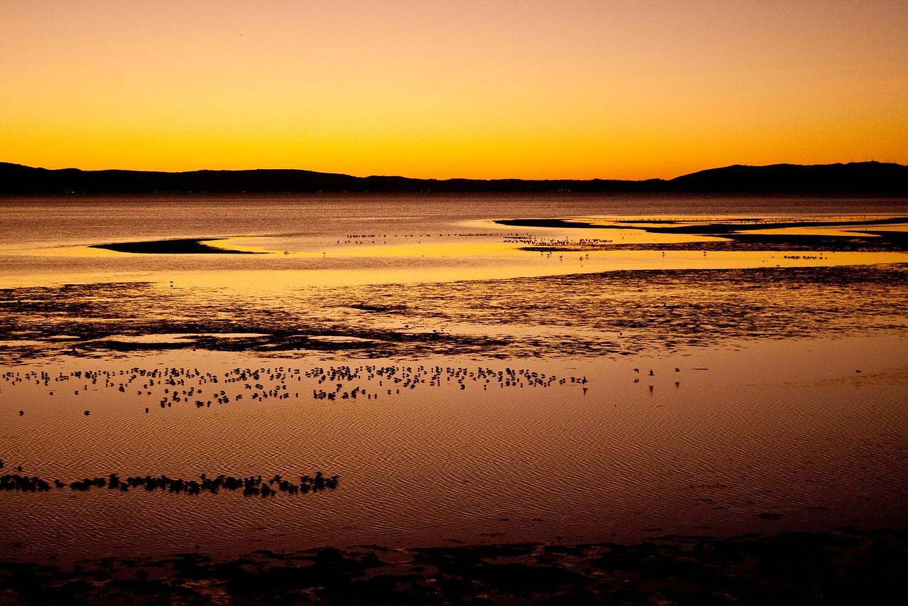 SF Bay mudflats at twilight
