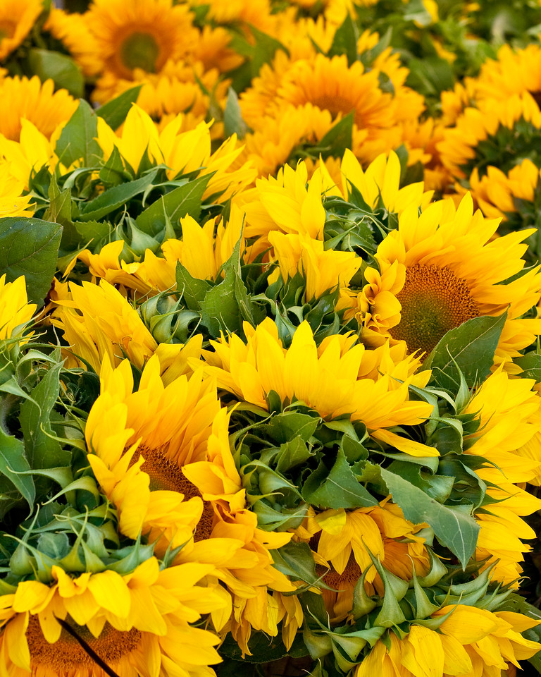 Sunflowers at Walnut Creek Farmers' Market