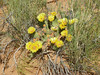 Devil's Garden, Prickly pear, Arches