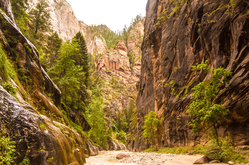 The Narrows in Zion, at the tail end of a flash flood.  It was still raining.