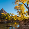 The Watchman rises above Zion National Park in Utah at the peak of fall color along the river.