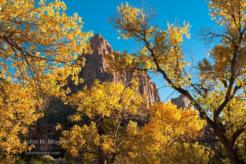 Zion National Park's Watchman, through fall folliage.